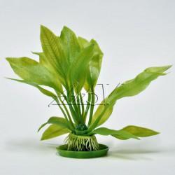 """Аквариумное растение """"Amazon"""" S-1 (малый)"""