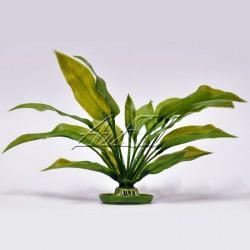 """Аквариумное растение """"Amazon"""" S-2 (средний)"""
