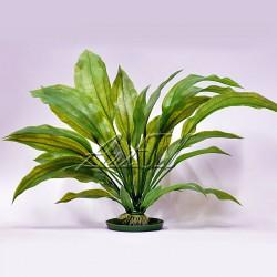 """Аквариумное растение """"Amazon"""" S-5"""