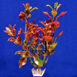 Растение пластиковое Людвигия красная 20 см